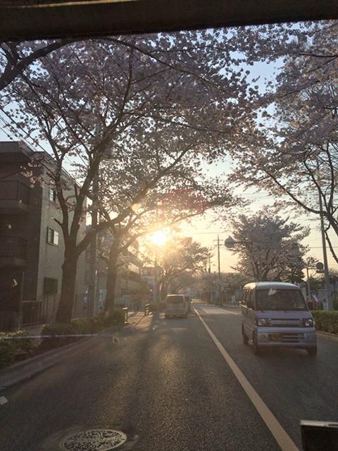 群馬県は館林市にて桜吹雪の中を走りました。