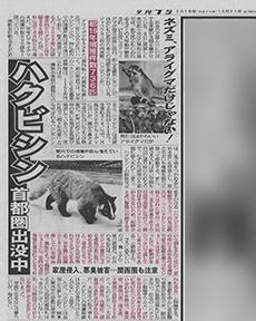 夕刊フジ2018年10月31日ハクビシン被害記事内コメント掲載
